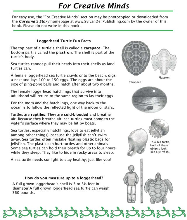 Loggerhead Turtle Fun Facts Lesson Plan