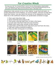What Do We Use From the Rainforest? Lesson Plan