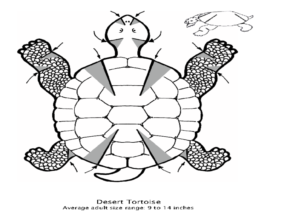 Diamond Terrapin Fun Facts Worksheet