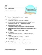 Ray Multiple Choice Activity Worksheet
