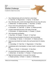 Starfish Challenge Worksheet
