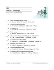 Dolphin Challenge Worksheet
