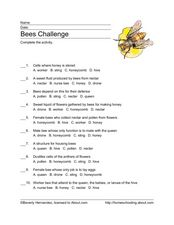 Bees Challenge Worksheet