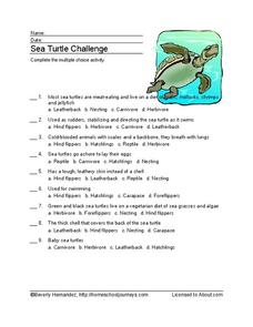 Sea Turtle Challenge Worksheet for 3rd - 4th Grade ...