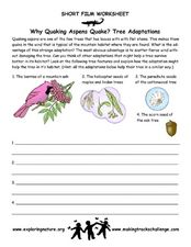 Tree Adaptations Worksheet