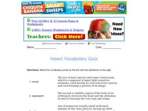 Insect Vocabulary Quiz Worksheet