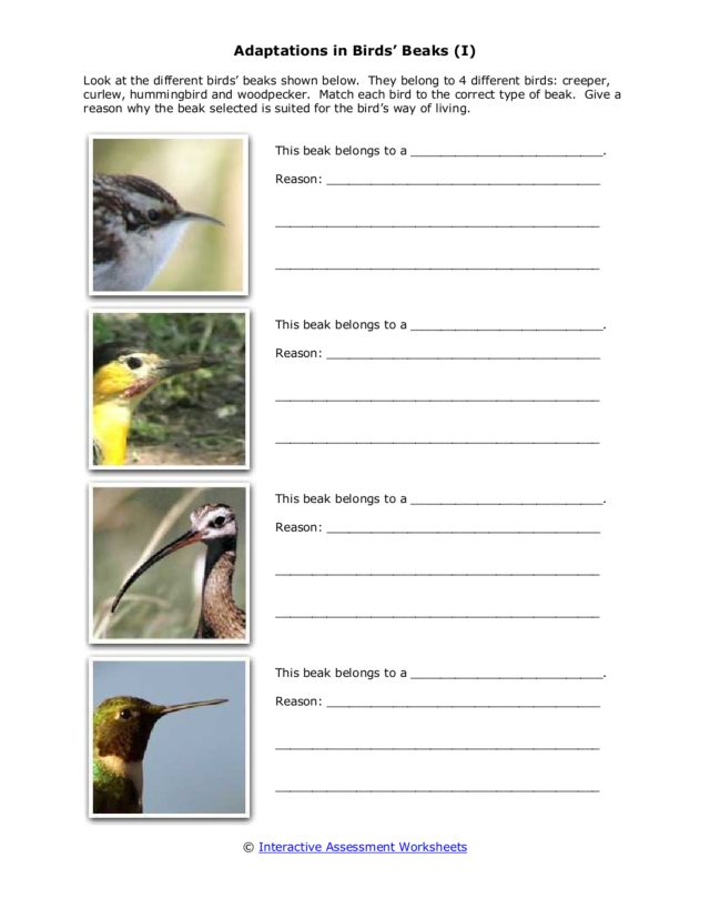Adaptations In Bird 39 S Beaks Worksheet For 3rd 6th Grade