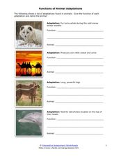 Functions of Animal Adaptations 4th - 7th Grade Worksheet   Lesson ...