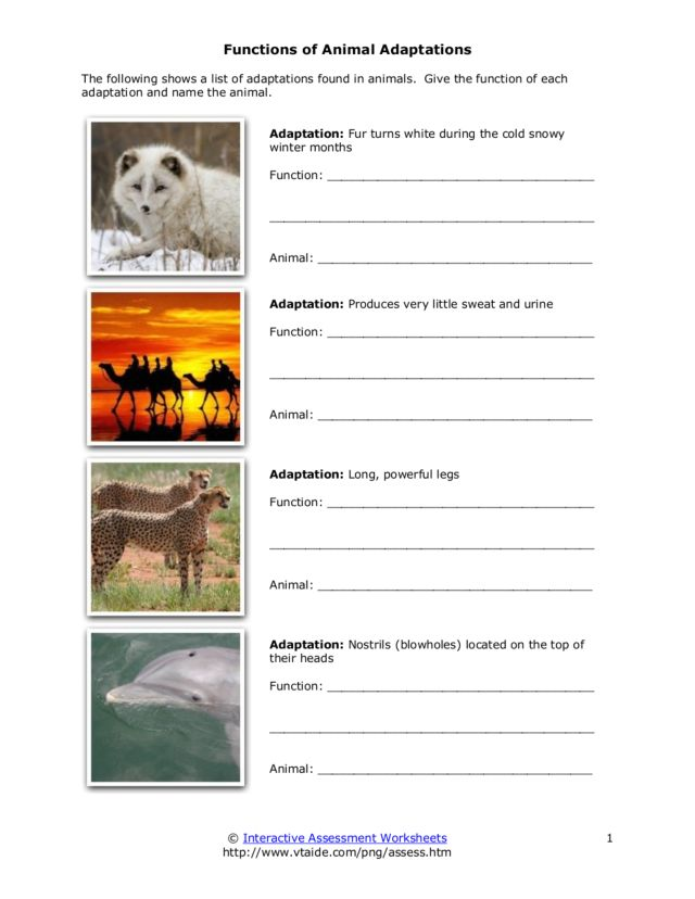 Functions Of Animal Adaptations Worksheet For 4th 7th