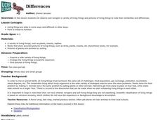 Differences Lesson Plan