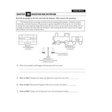 Digestion and Nutrition Worksheet