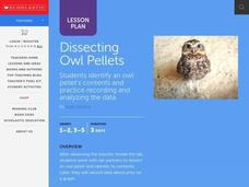 Dissecting Owl Pellets Lesson Plan
