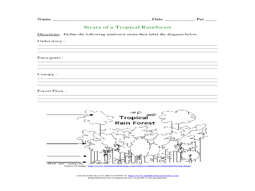 Worksheets Layers Of The Rainforest Worksheet worksheets layers of the rainforest worksheet pureluckrestaurant strata a tropical 3rd 4th grade lesson