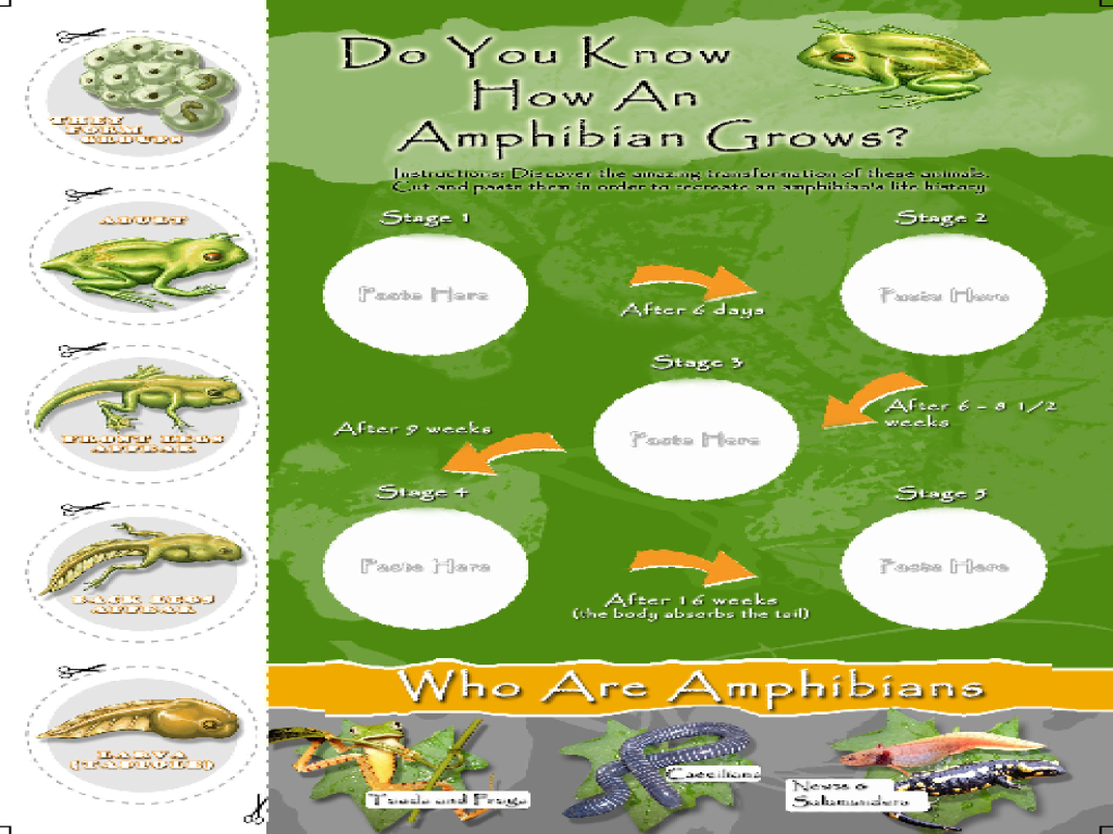 Do You Know How an Amphibian Grows? Graphic Organizer