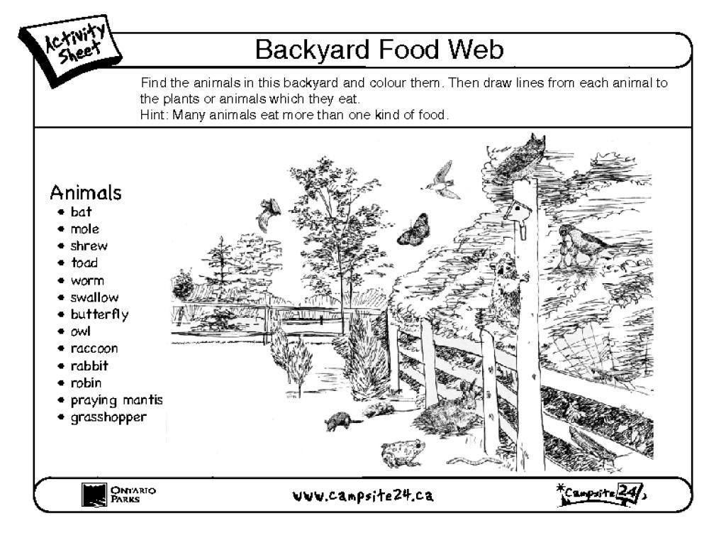 Backyard Food Web Graphic Organizer For 3rd 6th Grade
