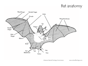 label car diagram label bat diagram bat anatomy worksheet for 4th - 5th grade | lesson planet