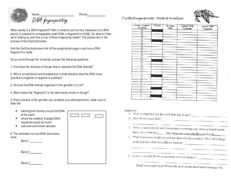 DNA Fingerprinting 9th - 12th Grade Worksheet | Lesson Planet