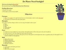 Do Plants Need Sunlight? Lesson Plan