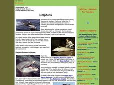 Dolphins Lesson Plan