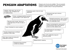 Adaptations of Penguins Worksheet