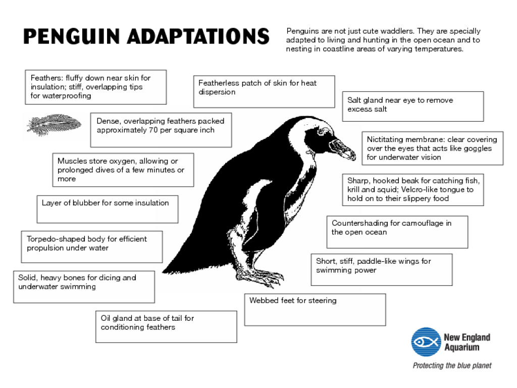 adaptations of penguins graphic organizer for 7th