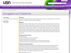 Drugged Out Daphnia Lesson Plan