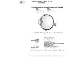 Practice Worksheets: Parts of the Eye Worksheet for 6th ...