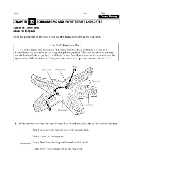 Echinoderms Worksheet for 9th - 12th Grade | Lesson Planet