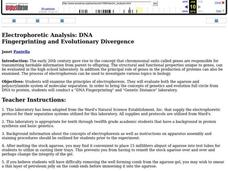 Electrophoretic Analysis: DNA Fingerprinting and Evolutionary Divergence Lesson Plan