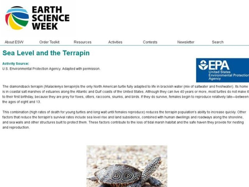 Sea Level and the Terrapin Lesson Plan
