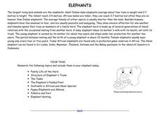 Elephants Worksheet