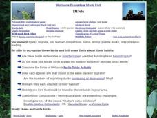 Birds: Wetlands Ecosystems Interactive