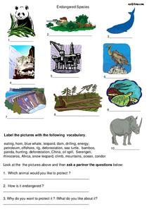 Endangered Species Lesson Plan