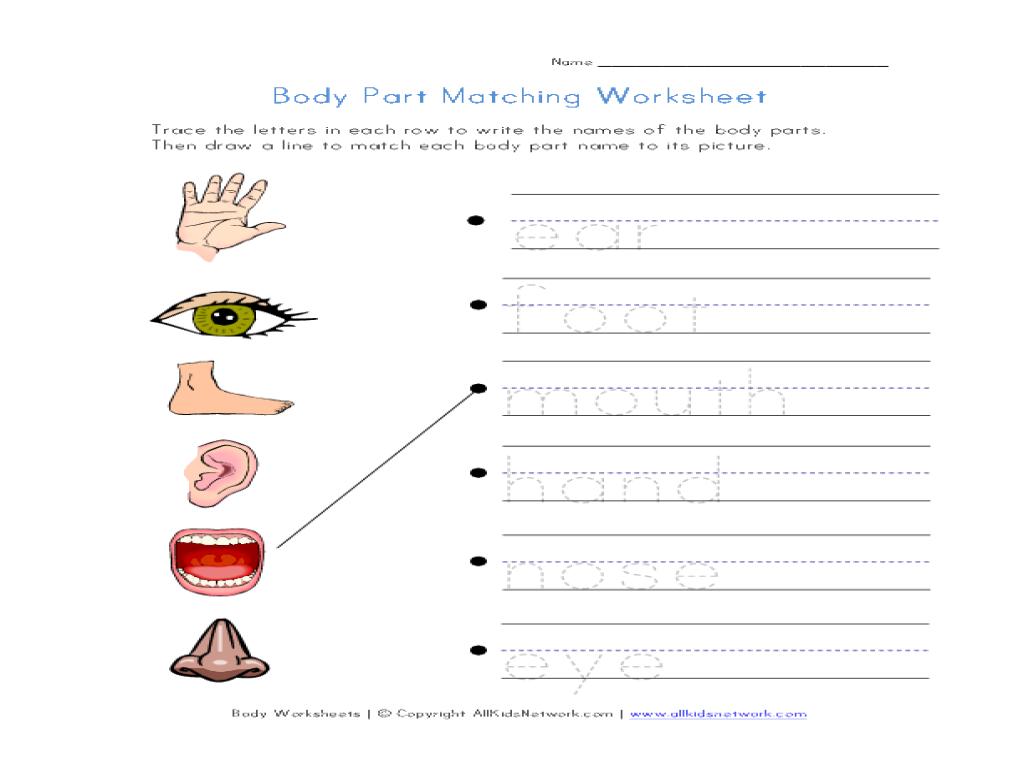 Body Parts Matching Worksheet Worksheet for 1st - 3rd Grade ...