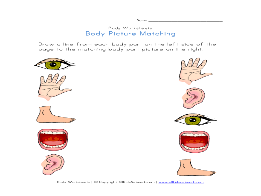 Body Part Picture Match Worksheet for Kindergarten - 1st ...