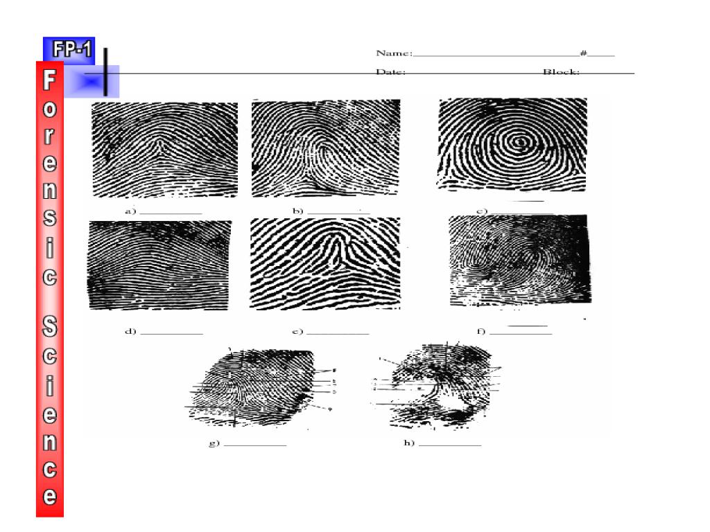 Fingerprint Identification 1 Worksheet For 10th 12th Grade Lesson Planet