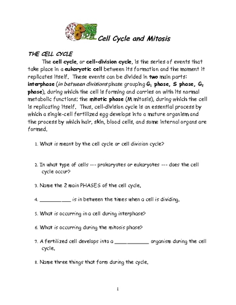 Cell Cycle and Mitosis 6th - 12th Grade Worksheet | Lesson Planet