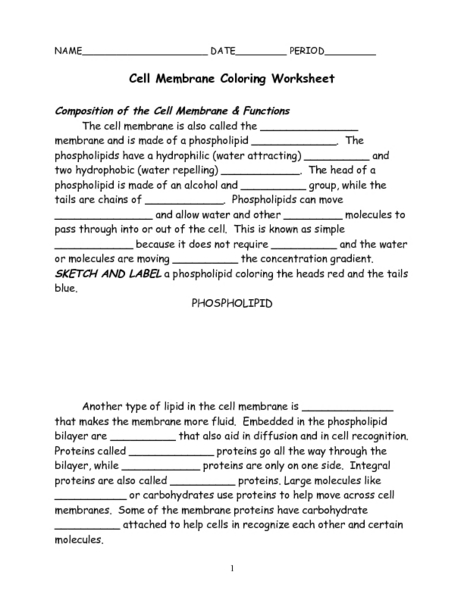 Cell Membrane Coloring Worksheet Worksheet for 7th - 9th Grade ...