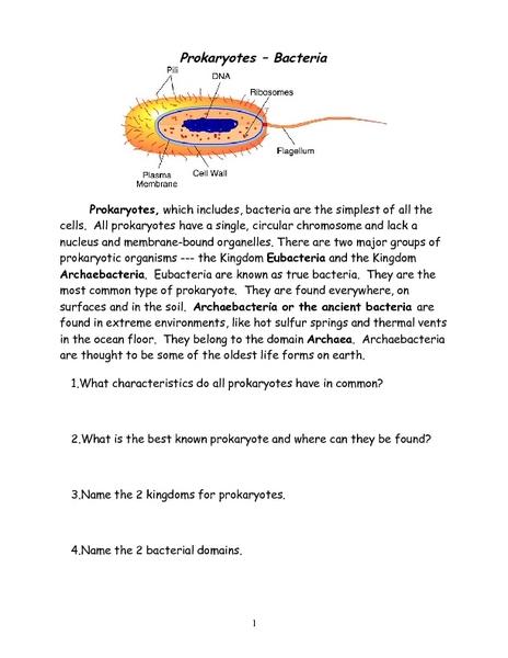 Prokaryotes-Bacteria 6th - 9th Grade Worksheet | Lesson Planet