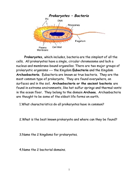 Prokaryotes-Bacteria Worksheet for 6th - 9th Grade | Lesson ...