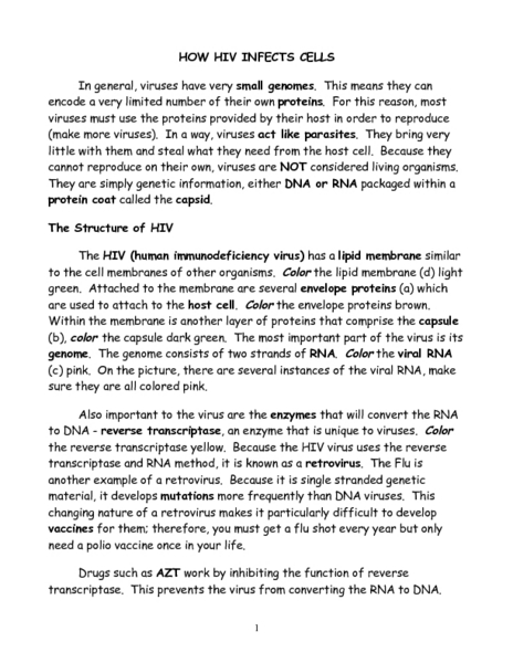 as well  in addition HIV Coloring additionally The Viral Life Cycle   Microbiology together with HIV Coloring in addition The HIV Life Cycle   Understanding HIV AIDS   AIDSinfo together with HIV graphic   students read how HIV infects the cell and color the likewise CK 12 Biology Chapter 24 Worksheets   Lymphocyte   Immune System further Biology Virus Worksheets   Homeshealth info in addition  as well Resistance Is Futile    or Is It  The Immunity System and HIV moreover How HIV Infects Cells   Google Docs further HIV Coloring KEY besides Good Answer Worksheet     topsimages furthermore  as well worksheet  How Hiv Infects Cells Worksheet  Carlos Lomas Worksheet. on how hiv infects cells worksheet
