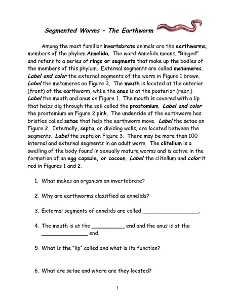 Segmented Worms The Earthworm Worksheet For 6th 10th Grade