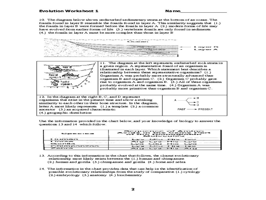 Evolution Worksheet Worksheet For 10th 12th Grade