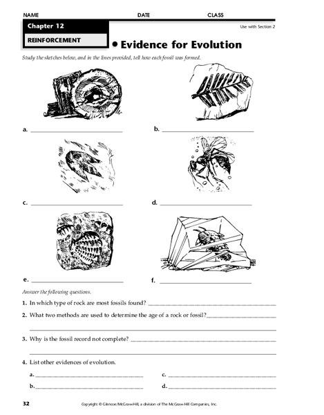 Evidence For Evolution Worksheet For 7th 12th Grade