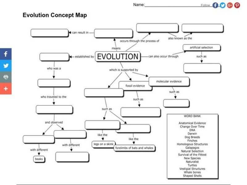 Evolution Concept Map Graphic Organizer for 7th Grade
