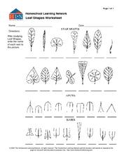 Leaf Shapes Worksheet Worksheet for 7th - 12th Grade ...
