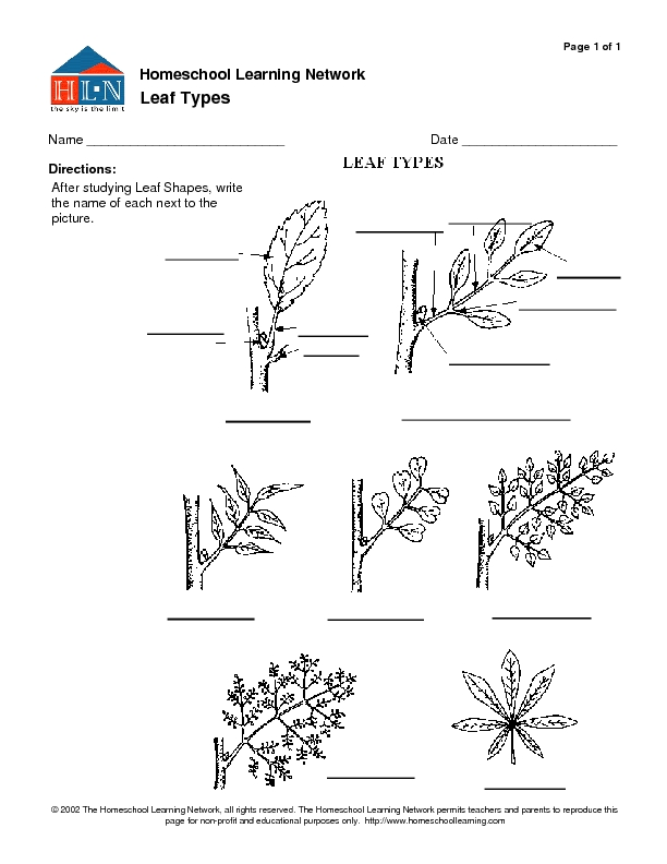 Leaf Types Worksheet For 7th 12th Grade Lesson Planet