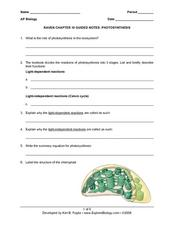 Raven Chapter 10 Guided Notes: Photosynthesis Worksheet for 9th ...