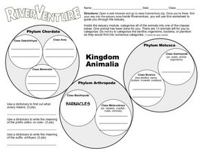 Image of: Concept Kingdom Animalia Worksheet Biology With Vanessa Wordpresscom Animalia Lesson Plans Worksheets Lesson Planet