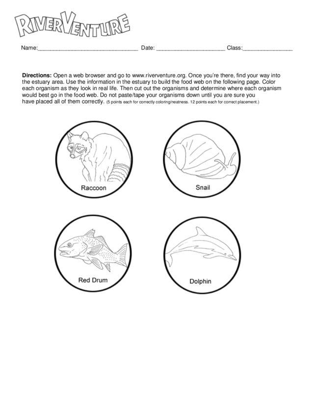 river venture food web worksheet food. Black Bedroom Furniture Sets. Home Design Ideas